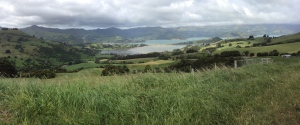 The drive out to Akaroa
